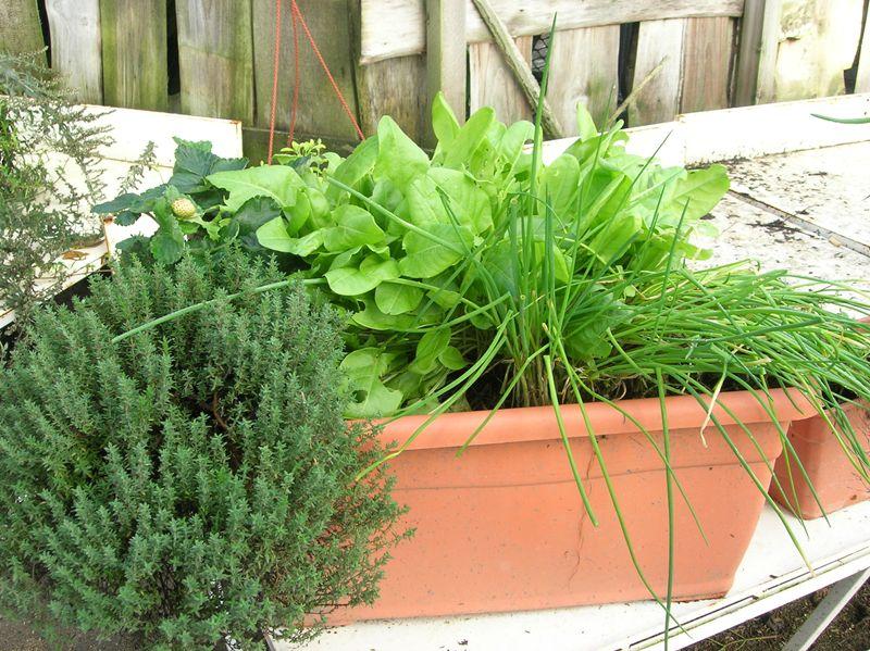 cultivez vos plantes aromatiques. Black Bedroom Furniture Sets. Home Design Ideas